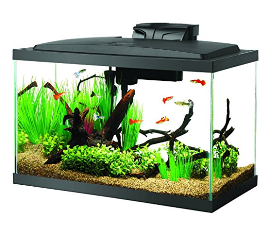 Aqueon LED 10 Gallon Aquarium