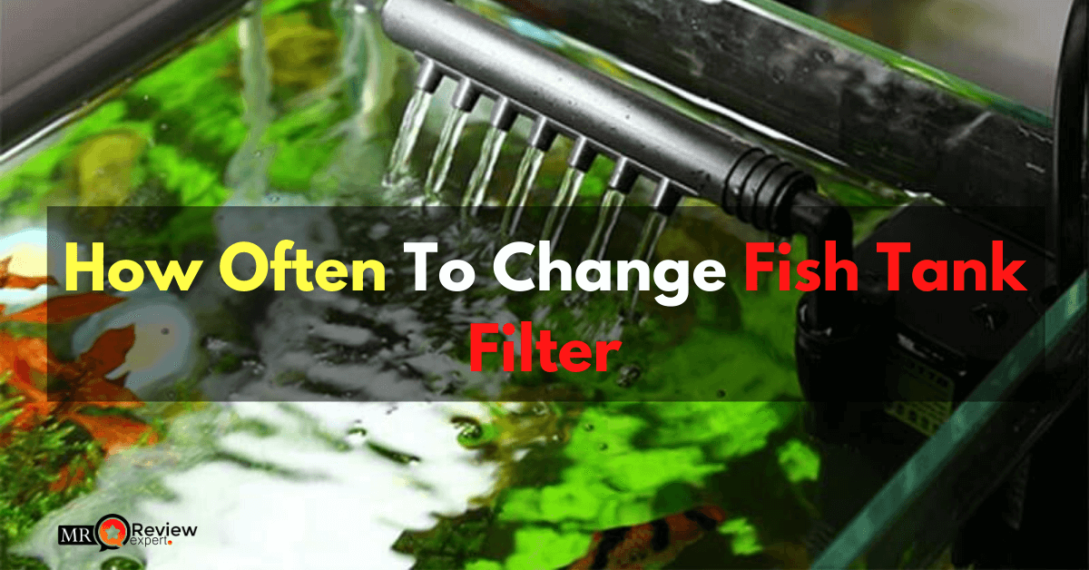 How Often To Change Fish Tank Filter